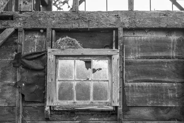 Abandoned nest, rustic barn, broken window, black and white