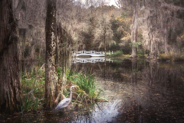 Magnolia Plantation Photography Art | Studio 221 Photography