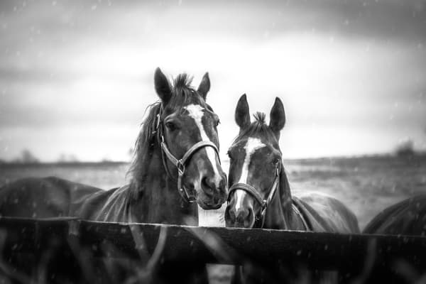Friends Photography Art | Studio 221 Photography