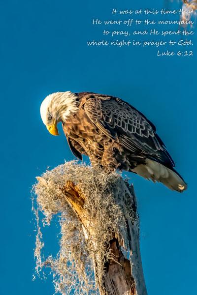 Eagle Prayer Luke 6:12