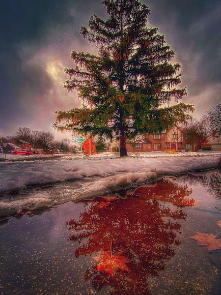 Pine Tree   Front Yard Art | DocSaundersPhotography