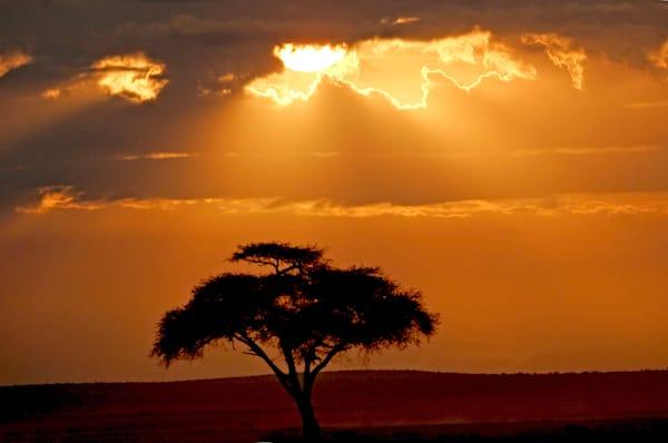 Acacia Sunset 2 Art | DocSaundersPhotography