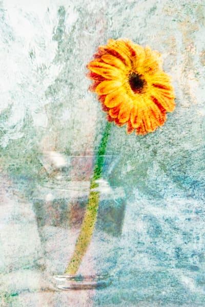 Floral Study 1 Photography Art | Mark Steele Photography Inc