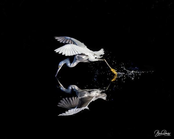 The Secret Cove Photography Art | brucedanz