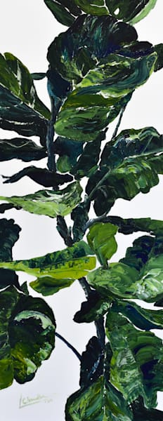 Fig tree, plant, art for sale