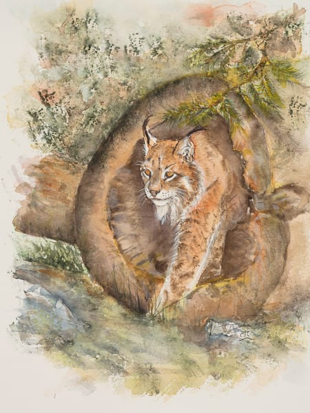 Canadian Lynx Art | Debra Bruner Studio