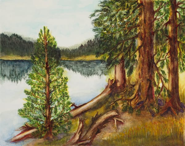 Pines Of Priest Lake  Art | Debra Bruner Studio