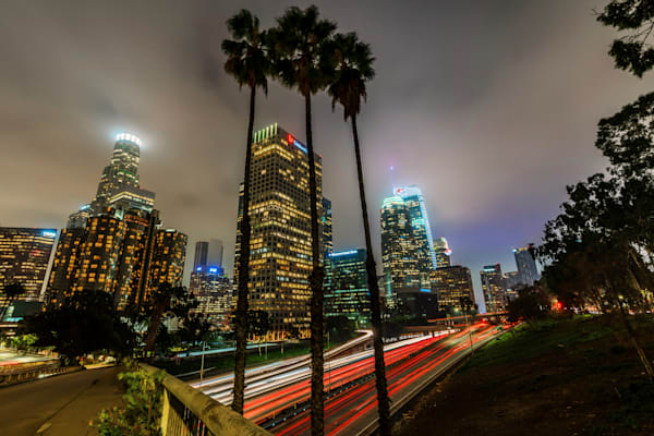 Downtown Los Angeles Palm Trees - Los Angeles Pictures