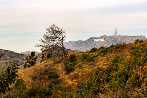The Hollywood Sign In The Wilderness Photography Art | William Drew Photography