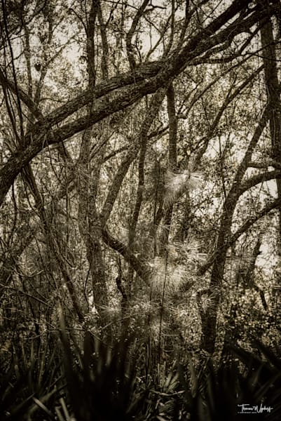 Southern Tangle, 2020. Black and white photograph by Thomas Wyckoff for sale as museum-quality prints.