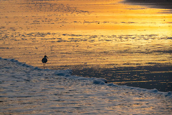 Sandpiper, sunset, and beach - shop fine art prints | Closer Views