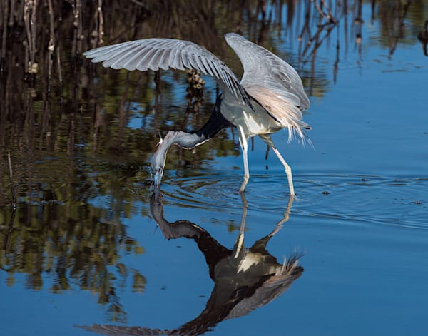 Photography By Festine Tricolored fishing reflection
