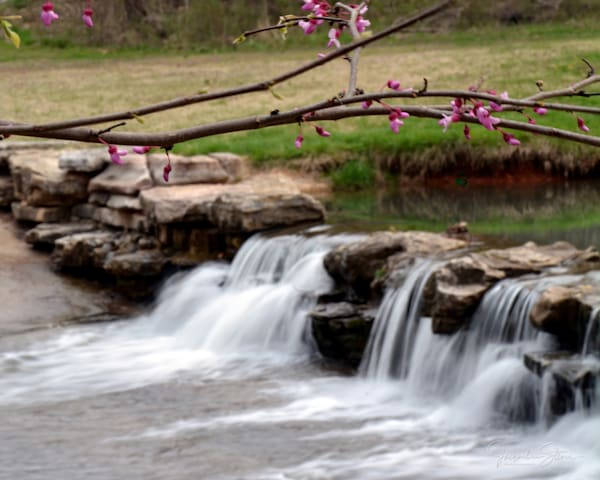 jstoner-spring-dogwood-canyon