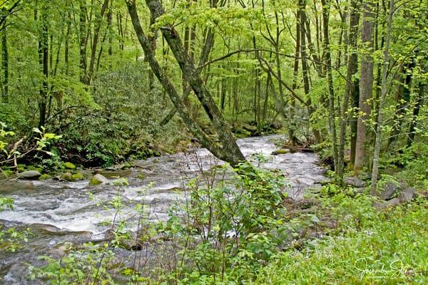 JStoner-Spring-in-Great-Smoky-Stream