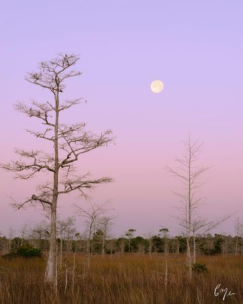 Everglades Landscapes