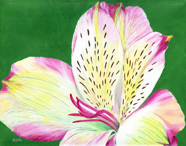 """Abundance"", an acrylic painting of the Alstroemeria flower by artist Mary Anne Hjelmfelt. Great floral art for the home or office decor."
