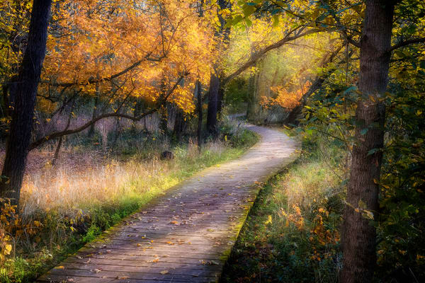 Kingfisher Trail Fall  Photography Art | Studio 221 Photography