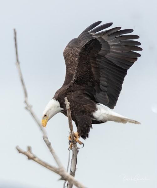 Klamathbirds 9 Photography Art | Barb Gonzalez Photography