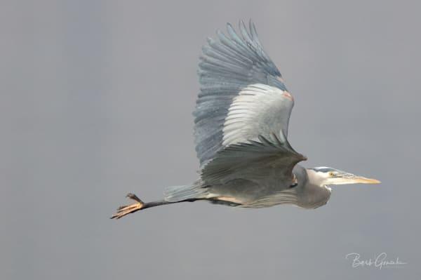 Klamathbirds 3 Photography Art | Barb Gonzalez Photography