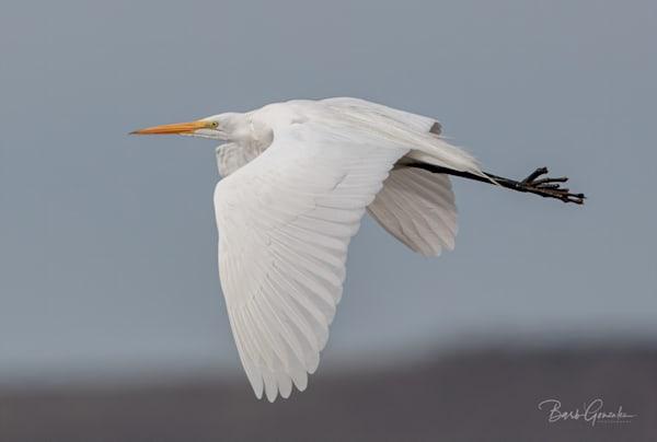 Klamathbirds 5 Photography Art | Barb Gonzalez Photography