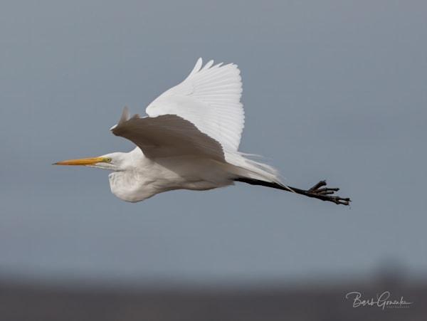 Klamathbirds 6 Photography Art | Barb Gonzalez Photography