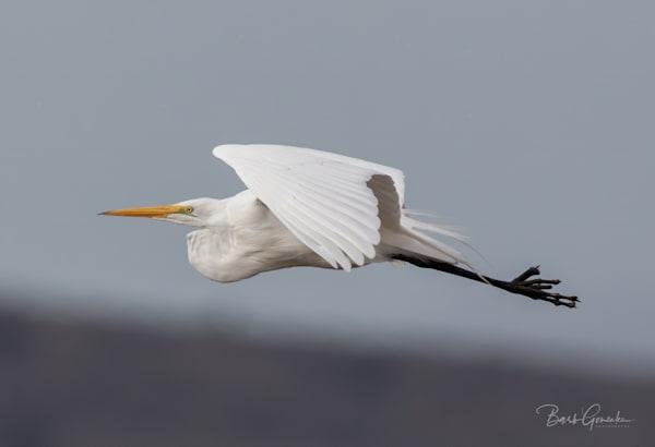 Klamathbirds 7 Photography Art | Barb Gonzalez Photography