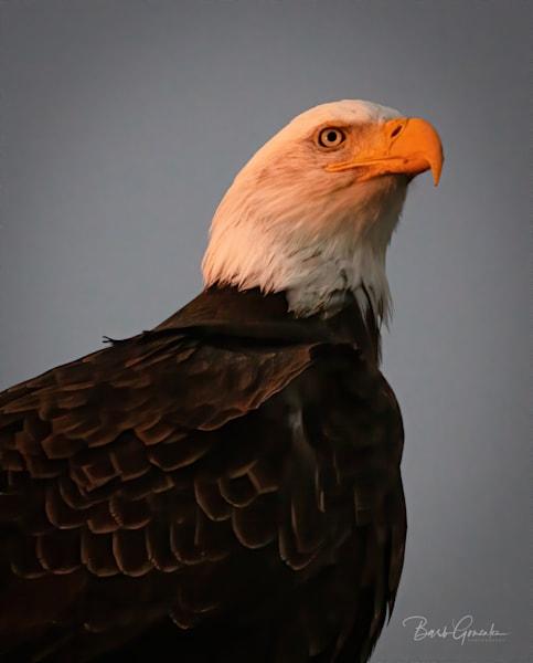 Klamathbirds 4 Photography Art | Barb Gonzalez Photography
