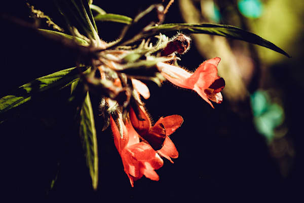 afternoon delight - floral photography