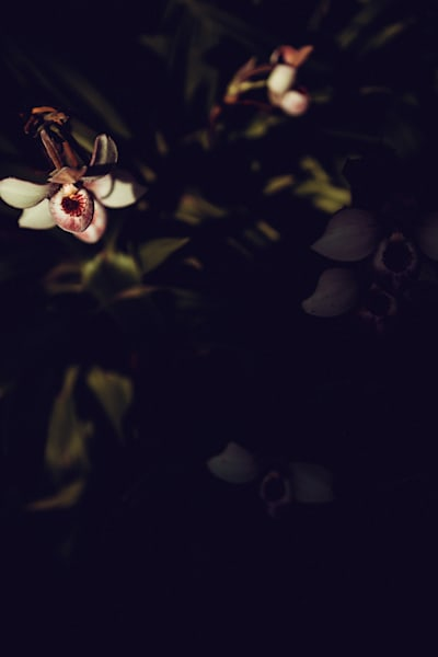 Dim the Lights - floral art
