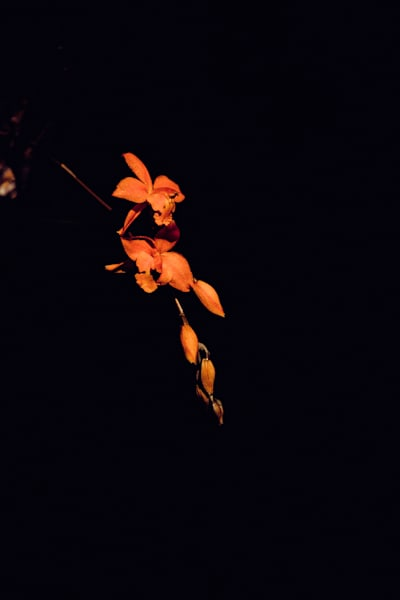 budding splendor - floral art