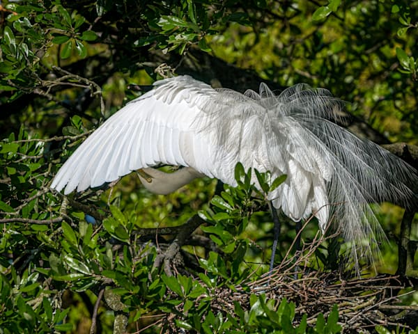 Photography By Festine grooming egret