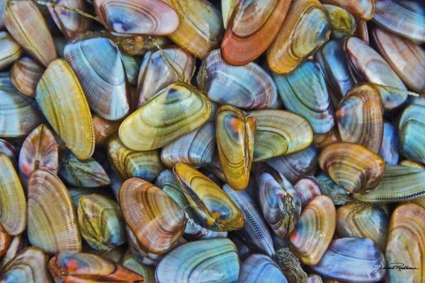 Jewels Of The Sea Ii  Art | JackieRobbinsStudio
