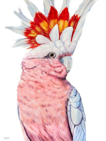 Frank - Major Mitchell Cockatoo