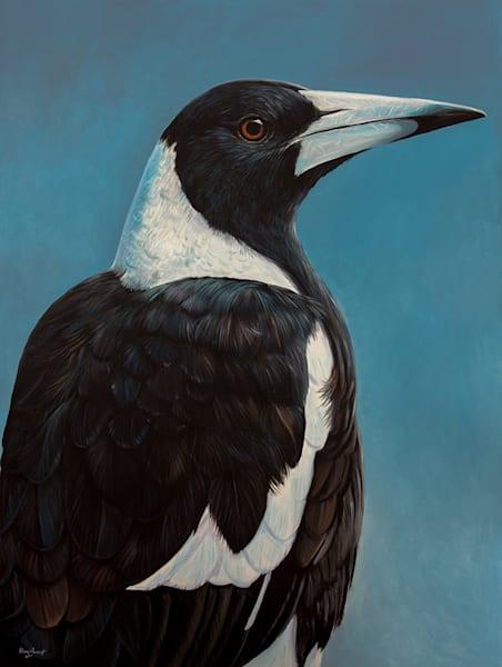 Maggie - Australian Magpie