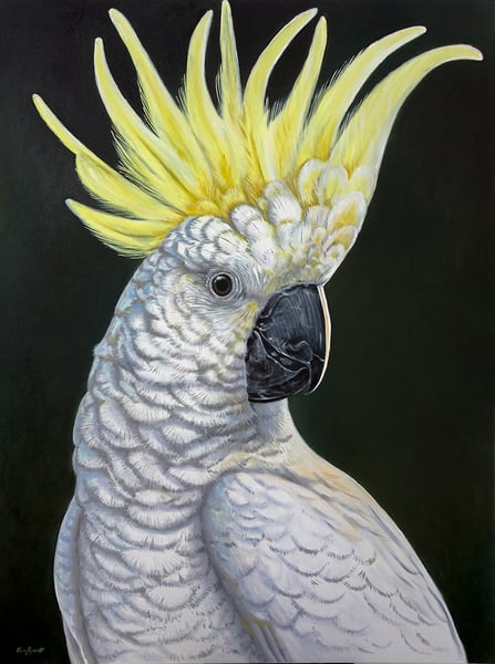 Simon - Sulphur Crested Cockatoo