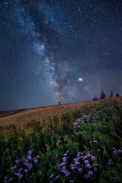Meadow Of Stars Photography Art   McKendrick Photography