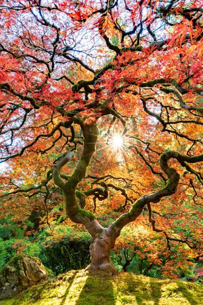 Twisted Zen Sunburst