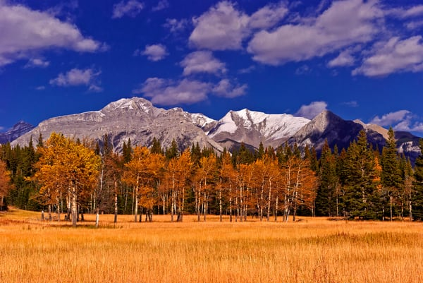 A meadow outside Banff and just below the Fairholme Range.Banff National Park Canadian Rockies Rocky Mountains 