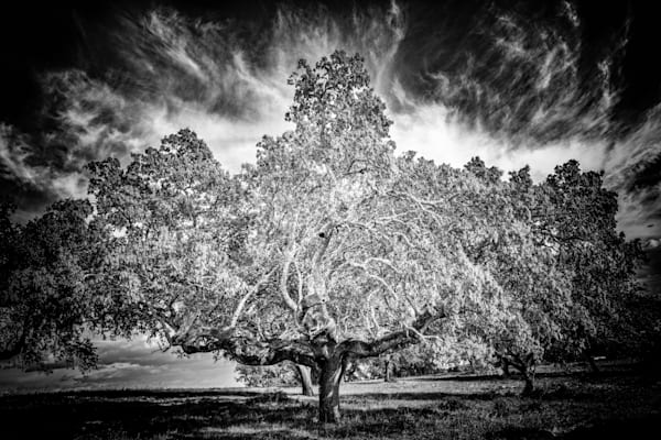 Tree #145: Bearing The Burden Photography Art | Roberto Vámos Photography