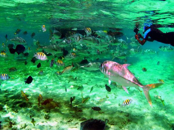 Shark Ray Alley 1 Art | DocSaundersPhotography