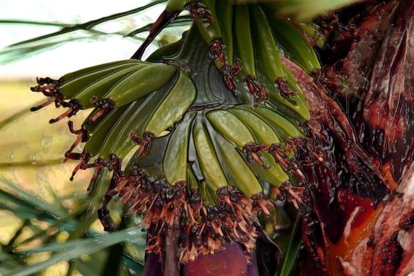 Banana Tree Art | DocSaundersPhotography