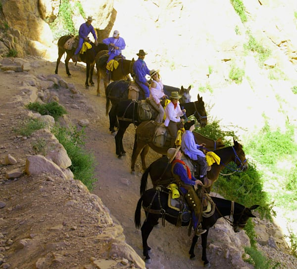 Bright Angel Trail   Mules 3 Art | DocSaundersPhotography