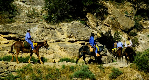 Bright Angel Trail   Mules 2 Art   DocSaundersPhotography
