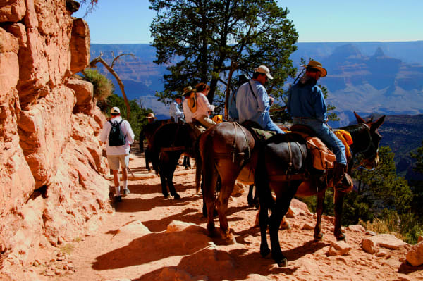 Bright Angel Trail   Mules Art | DocSaundersPhotography