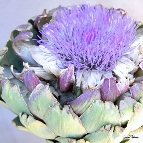 Artichoke Lavender  Art | JackieRobbinsStudio