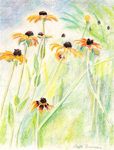"""Coneflowers"" fine art print by Gayle Brunner."