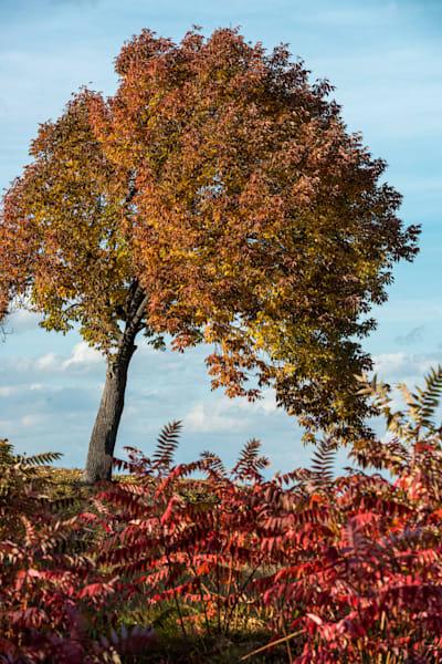 Photography By Festine autumn color at Thatcher Park