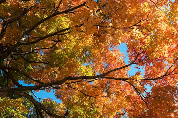Brilliant fall foliage Saratoga Springs