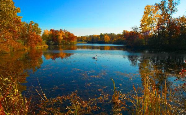 Kensington Swan Lake Art | DocSaundersPhotography