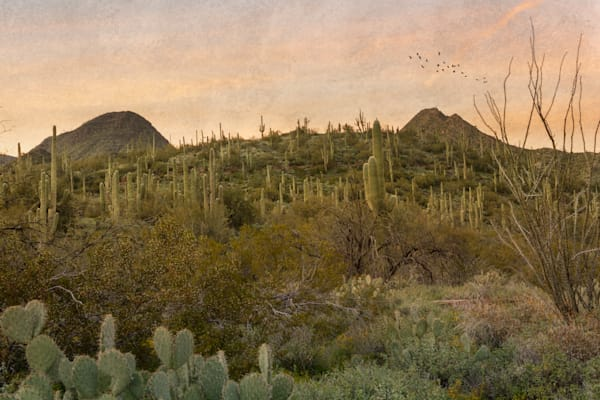 Cacti Jungle